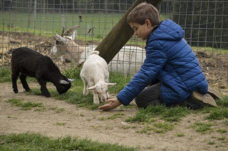 chłopiec karmi zwierzęta