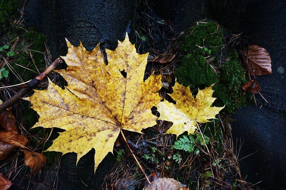 Kolory jesieni - Spacer Rodzinny