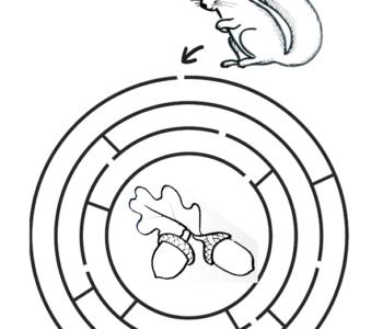 jesienny labirynt z wiewiórką