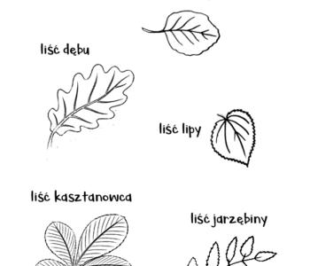 różne rodzaje liście kolorowanka do druku dla dzieci MiastoDzieci.pl