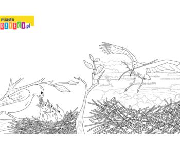 Kolorowanki Ptaki Malowanki Przyrodnicze Miastodzieci Pl