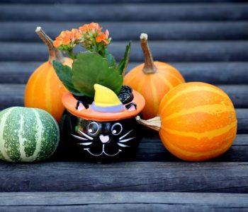 Balik przebierańców na Halloween