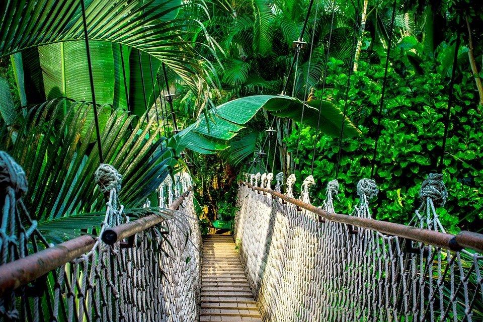 Leniwa Niedziela z... Wyprawą do tropikalnego lasu Ameryki Środkowej