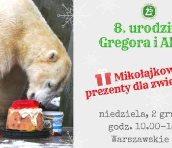Urodziny niedźwiedzi polarnych i mikołajki u zwierzaków w ZOO
