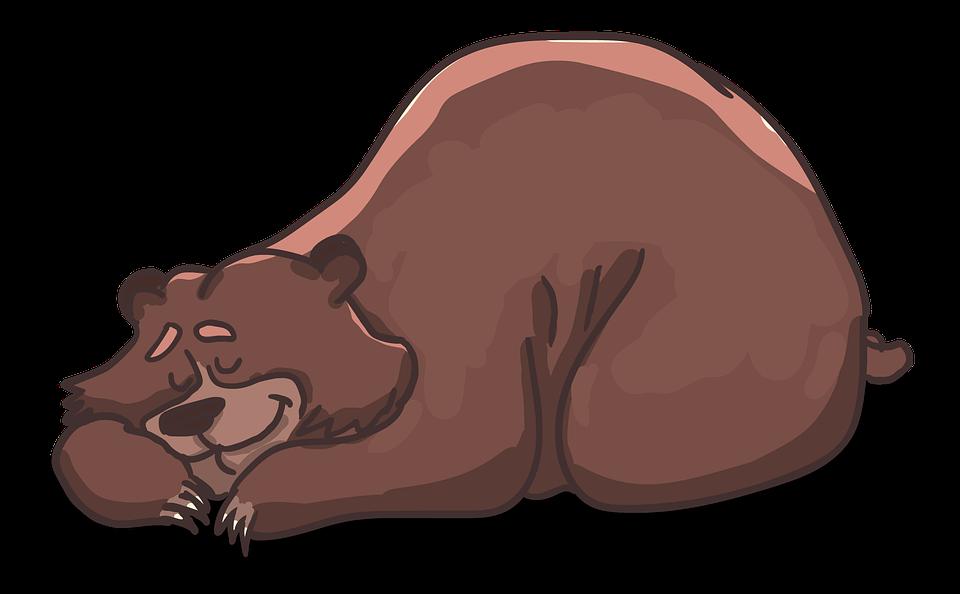 niedźwiedź pixabay