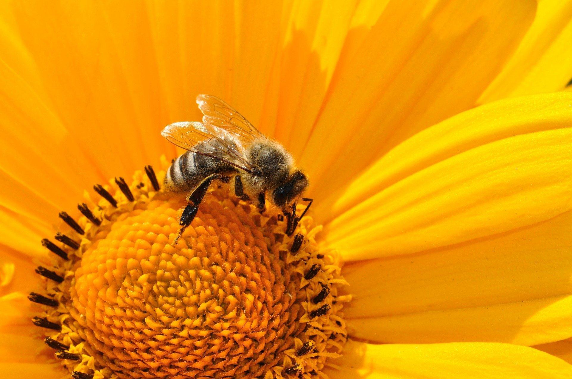 Moja mała Oj-czy-zna - Ratujmy pszczoły - atrakcje dla dzieci Trójmiasto 2018