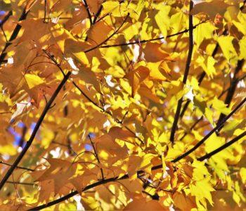 Kolory Gdańska: Żółty - najmniej lubiany. Spacer w ramach Gdańskich Miniatur