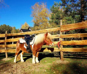 Jeździeckie zajęcia dla maluchów