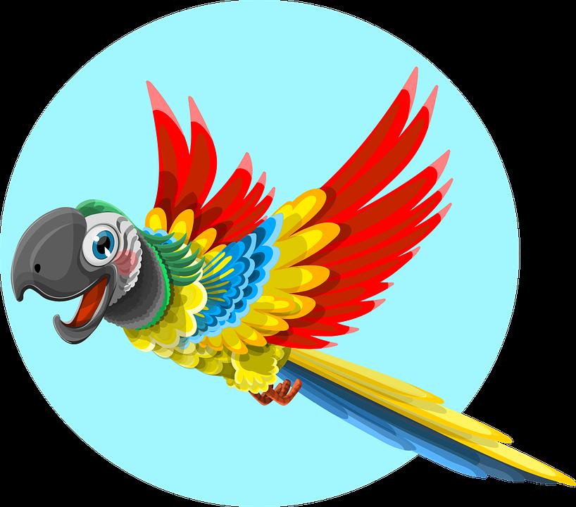 Papuga pixabay