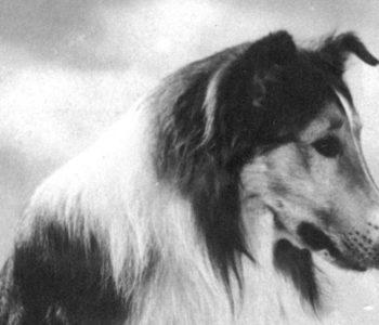 Filmoniada. Dyskusyjny Klub Filmowy: Lassie, wróć!