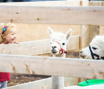 Warsztaty muzyczne: Wycieczka do Zoo