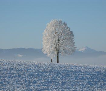 Zimowe kreacje – cykl Ferie w Muzeum