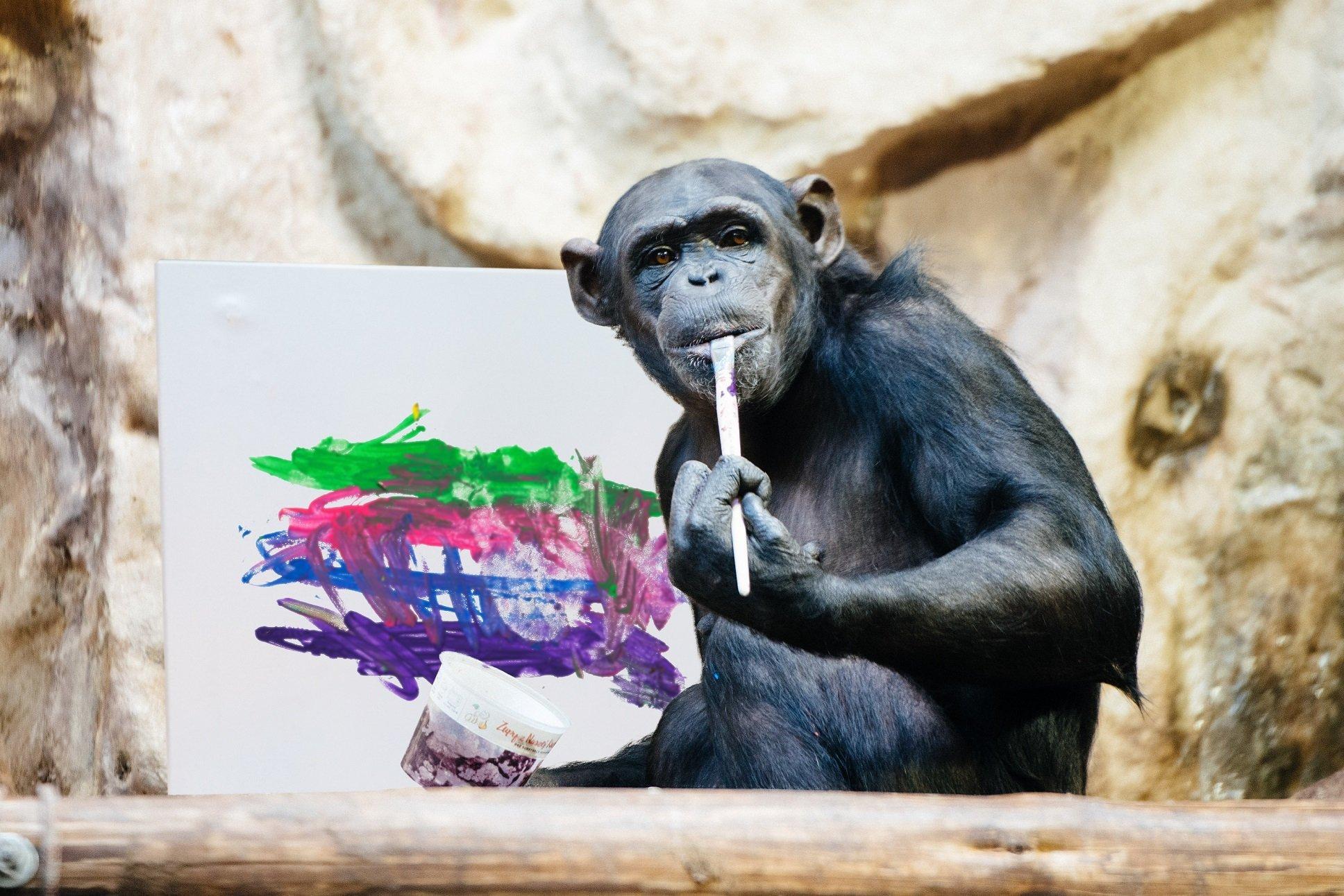 Obraz namalowany przez szympansicę Lucy na aukcji WOŚP