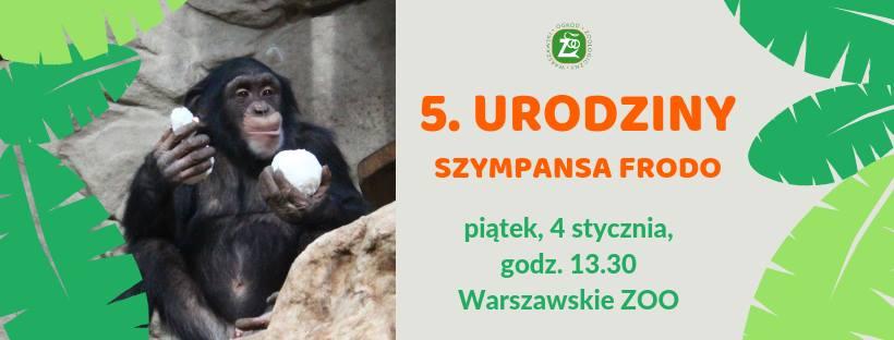 5. urodziny szympansa Frodo