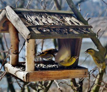 Sobotnie Zajęcia Artystyczne: TworzyMy Karmnik dla ptaków