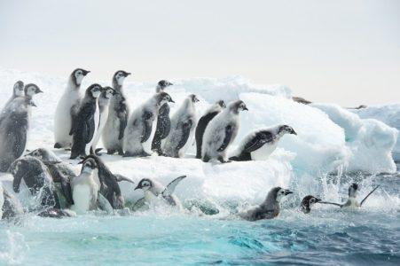marsz pingwinow 2