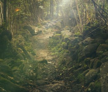 Opowieści z lasu - Karawana Opowieści dla dzieci
