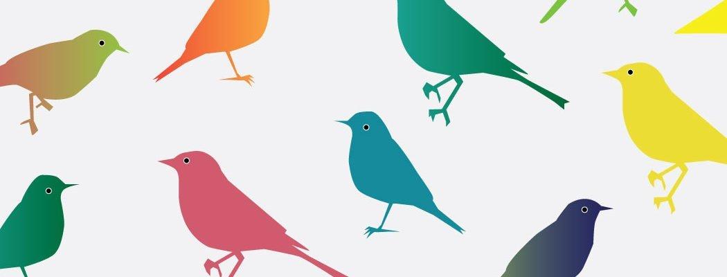 Entoniedziela: Ptaki dziwaki