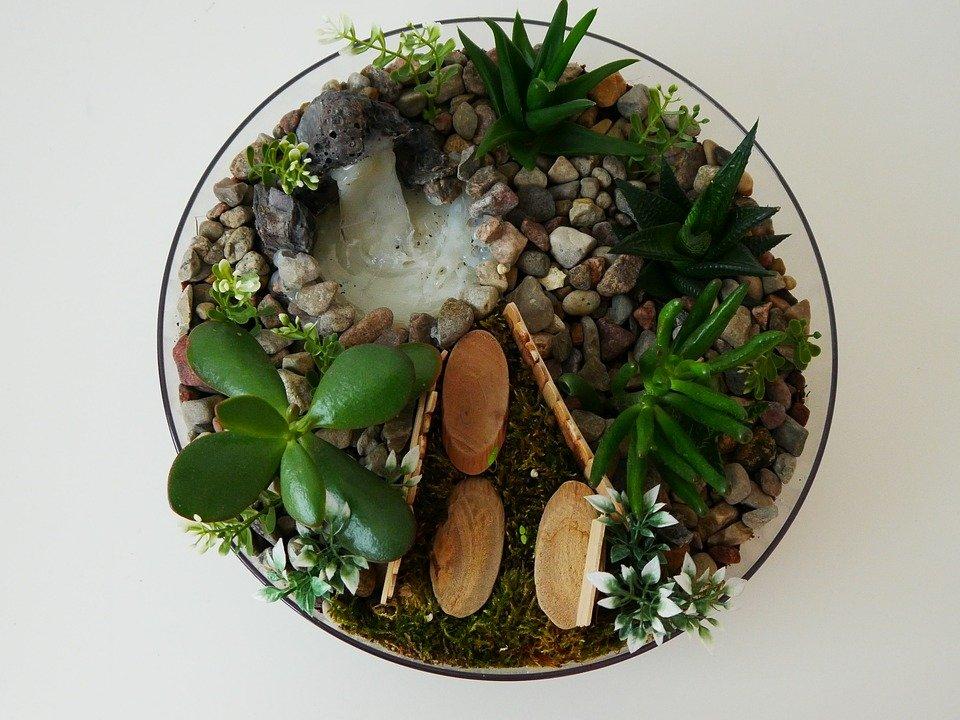 Ogródek z sukulentami