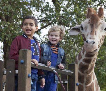 Kinowy podwieczorek: Moja żyrafa. Gliwice