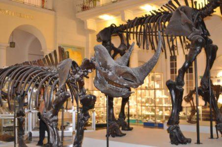 szkielety dinozaurów muzeum geologiczne