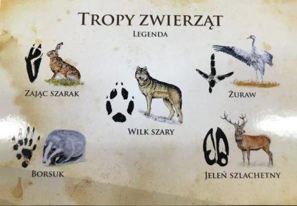 tablica tropy zwierząt