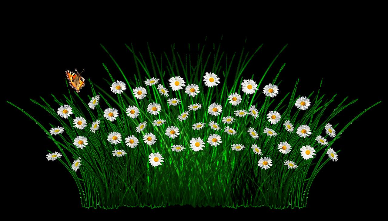 łąka pixabay kwiaty