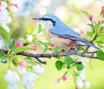 W oczekiwaniu na wiosnę – kwiatowe dzieła sztuki – warsztaty. Bytom