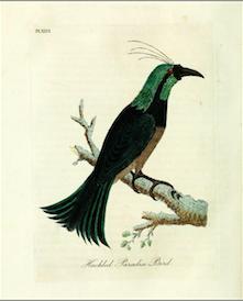 Ptak Zielonopióry w Teatrze Lalka