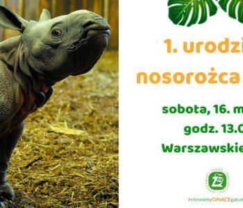 1. urodziny nosorożca Junga