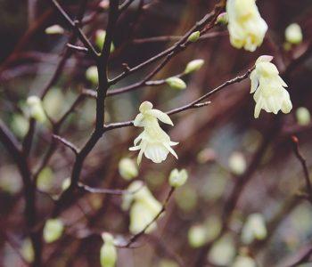 Wiosenne przebudzenie – wycieczka przyrodnicza do rezerwatu przyrody Morysin