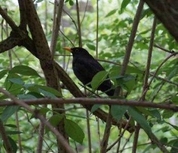 Wiosna w Lesie: Przebudzenie - Leśna Improwizacja