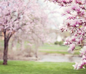Powitanie wiosny w Domu Kultury nr 3