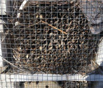 Domki dla owadów - warsztaty rodzinne