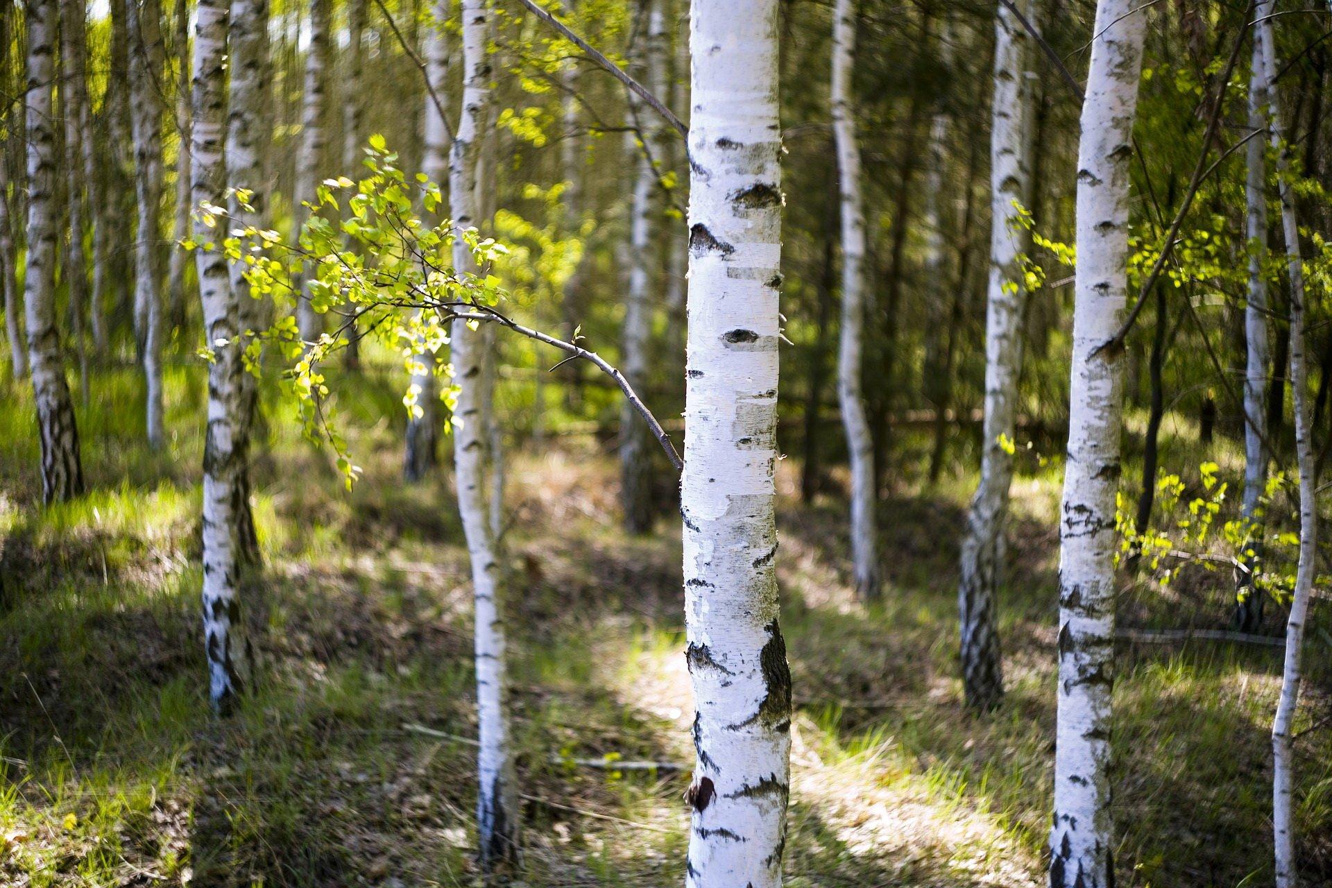 Zagadki o drzewach dla dzieci z odpowiedziami