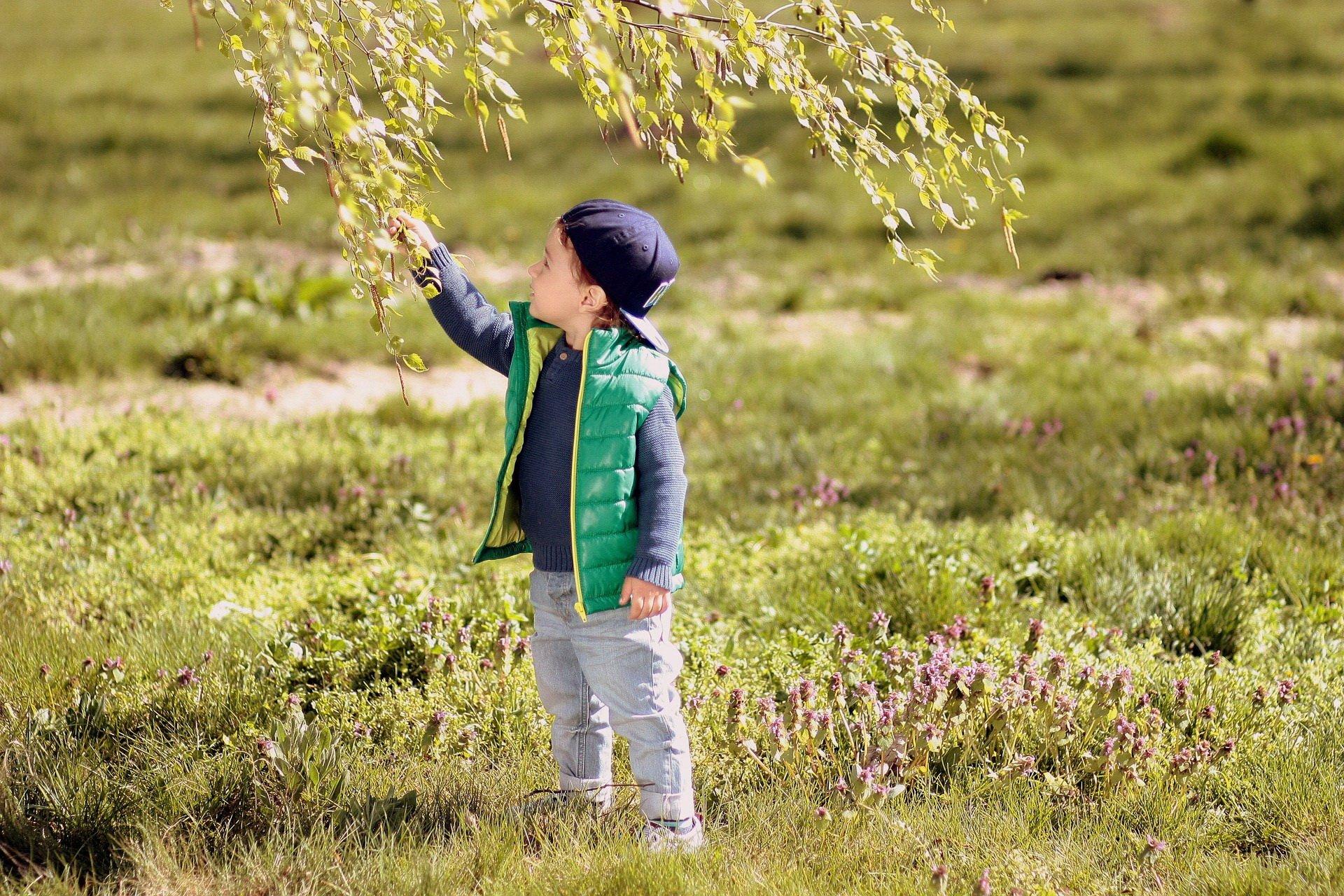 Zagadki o drzewach z odpowiedziami dla dzieci