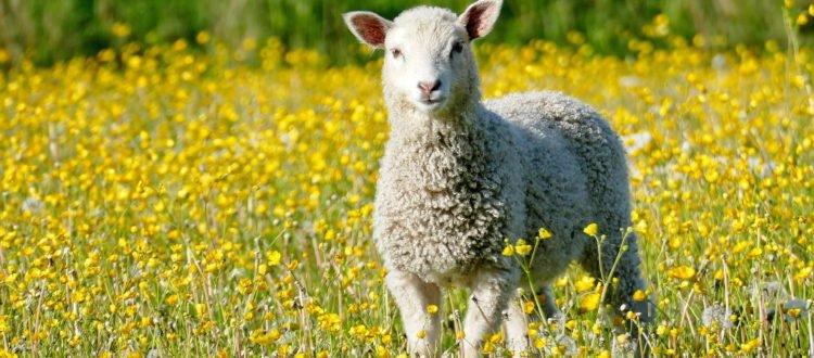 Zagadki dla dzieci z odpowiedziami zwierzęta gospodarskie