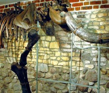 Mamut, nosorożec włochaty i łowcy reniferów znad Kłodnicy. Gliwice