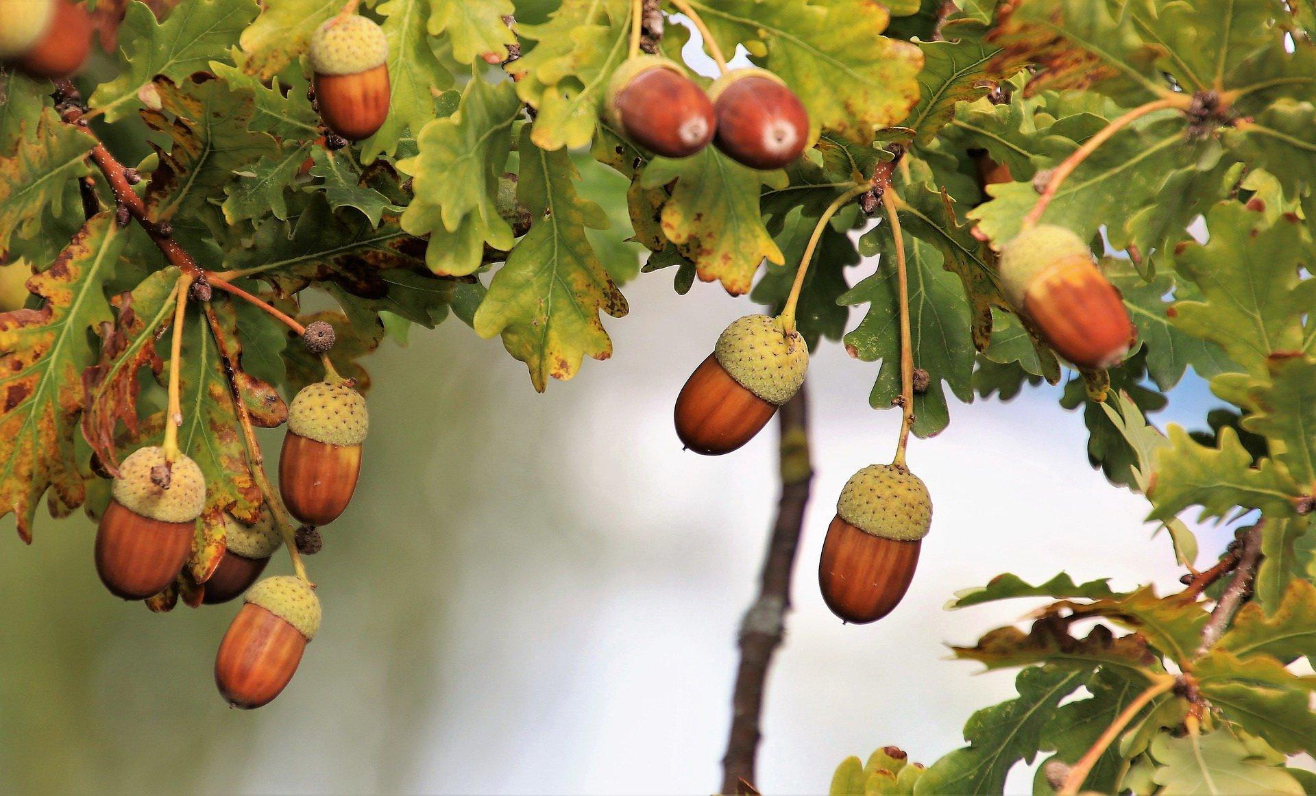 Zagadki o jesieni dla dzieci
