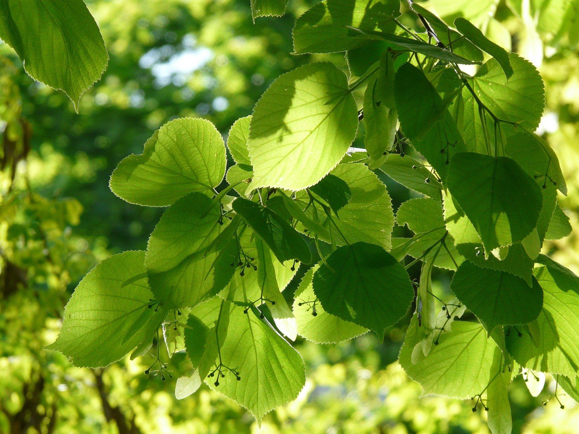 Zagadki o drzewach z odpowiedziami
