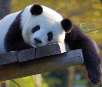 Sing and Smile. Panda Bear - warsztaty dla dzieci