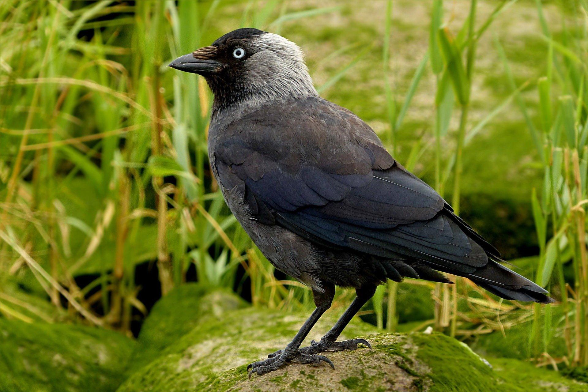 Zagadki o ptakach zwierzętach z odpowiedziami