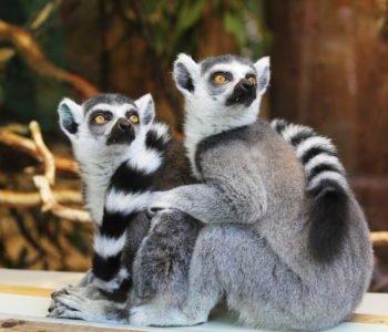 Zagadki dla dzieci o zwierzętach w ZOO