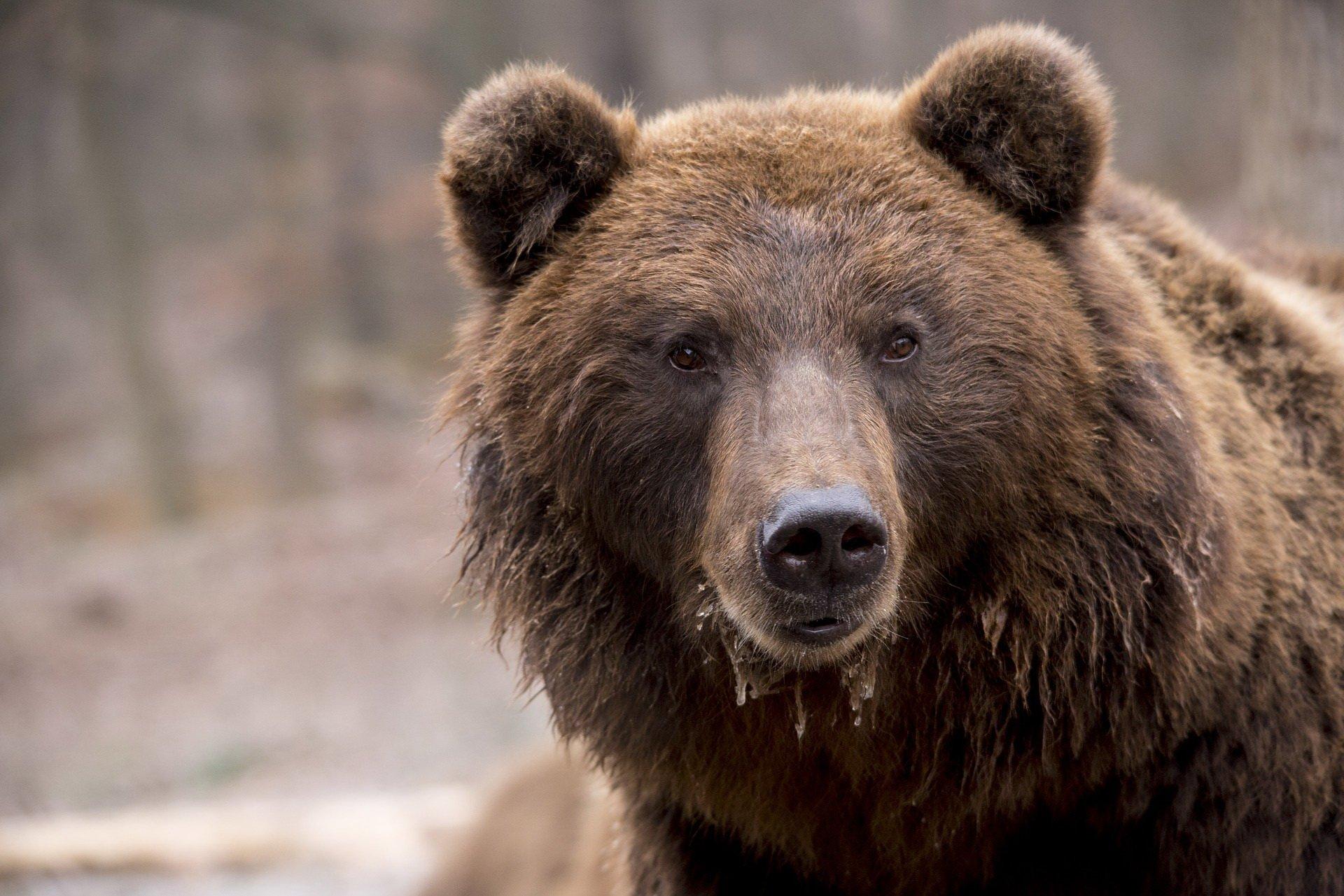 Zagadki o dzikich zwierzętach z odpowiedziami