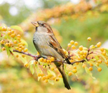 Zagadki dla dzieci o ptakach