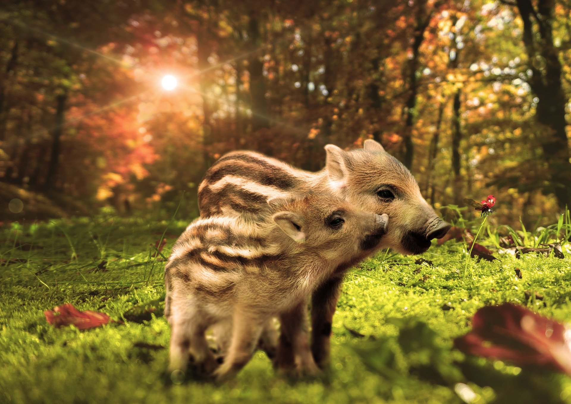 Zagadki o zwierzętach leśnych dziki