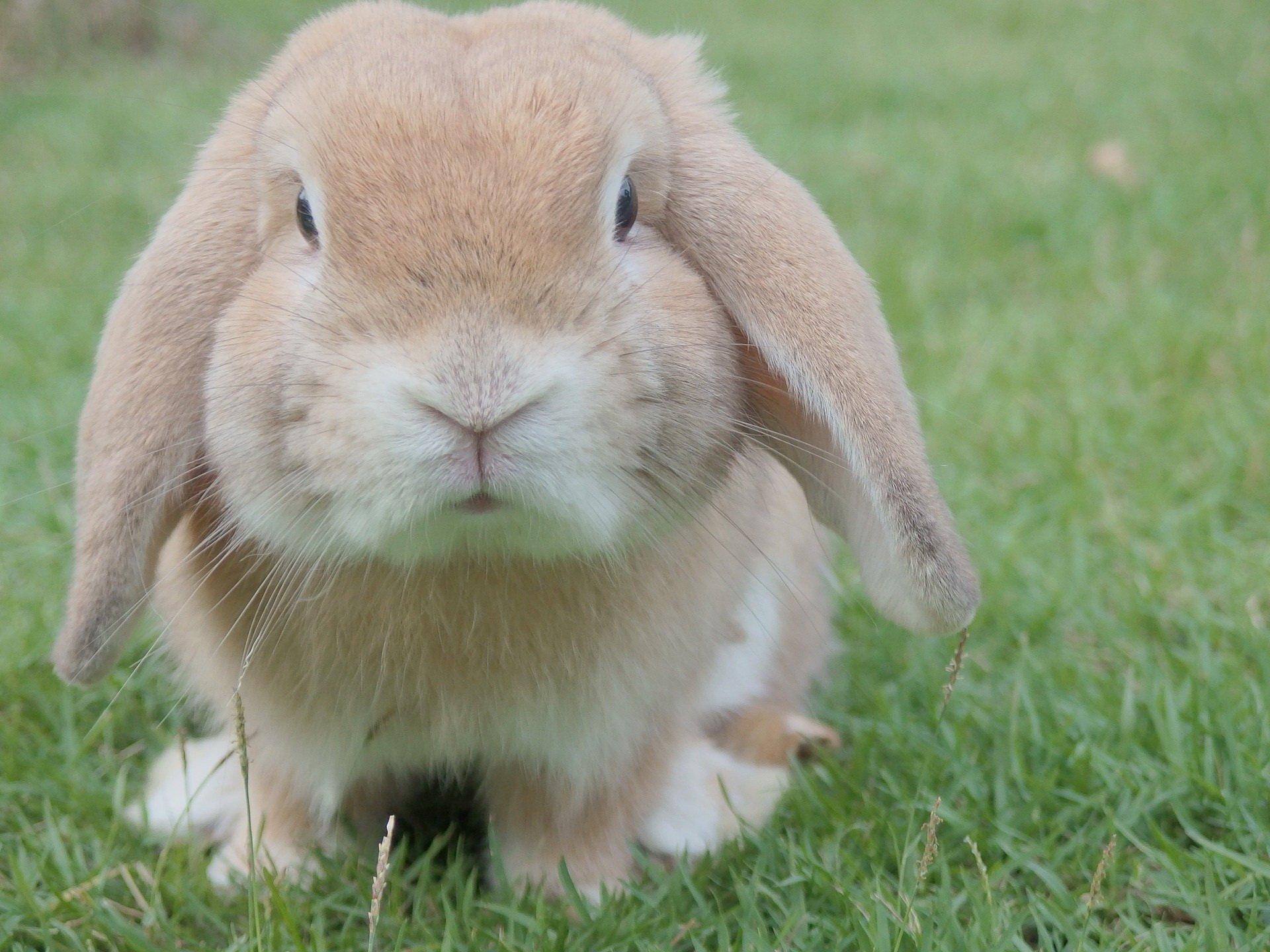 Śmieszne zagadki o zwierzętach dla dzieci