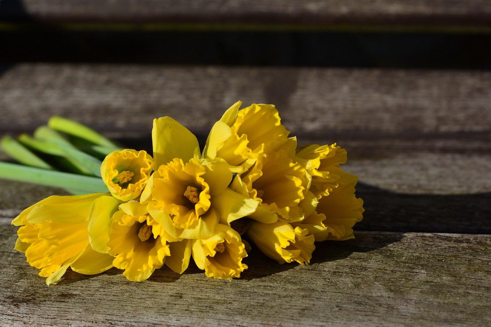 Zagadki dla dzieci z odpowiedziami kwiaty żonkile