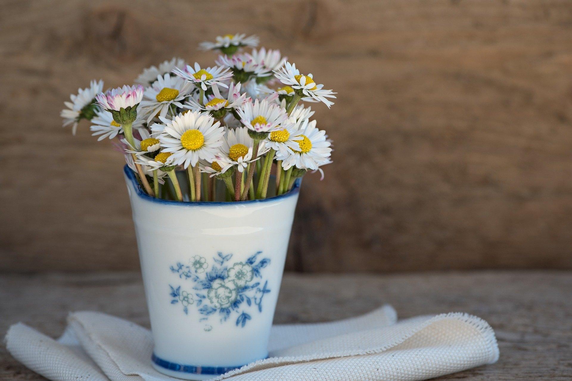 Zagadki dla dzieci z odpowiedziami stokrotka kwiaty