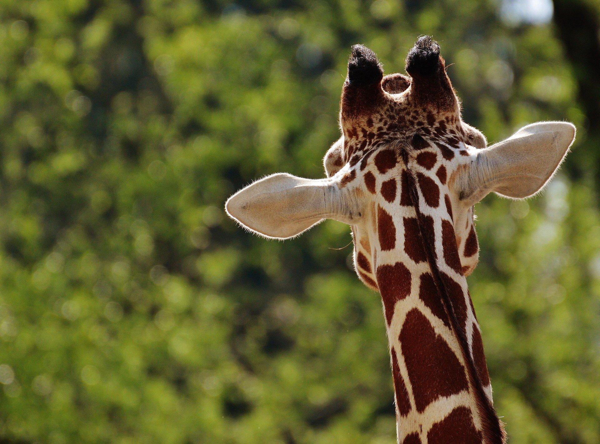 Zagadki o zwierzętach egzotycznych dla dzieci z odpowiedziami